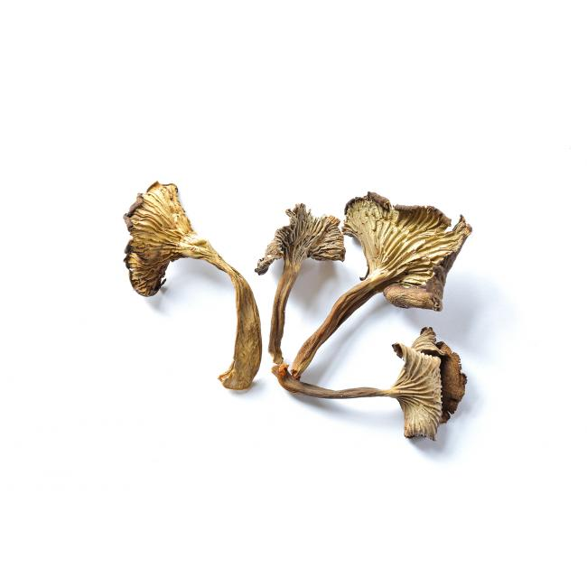 Funnel chanterelle